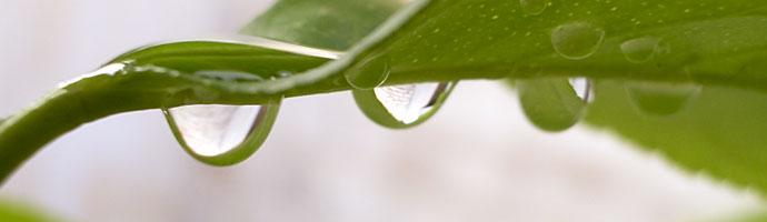 HydroRush root growth rainwater