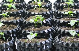 HydroRush Plants in soil