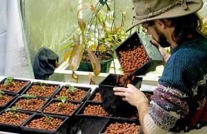 HydroRush hydroponics