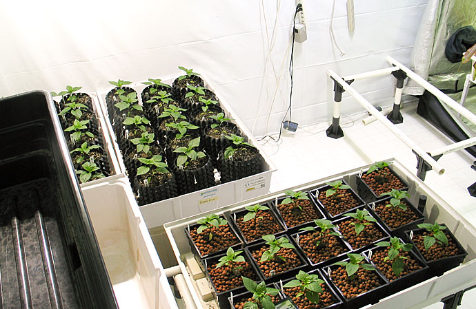 HydroRush Nutrient Change Day Grow Room