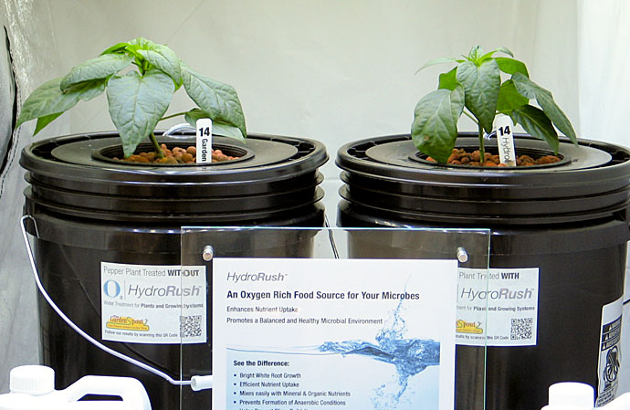 Hydrorush Day 27 Deep Water Culture Pepper Plants